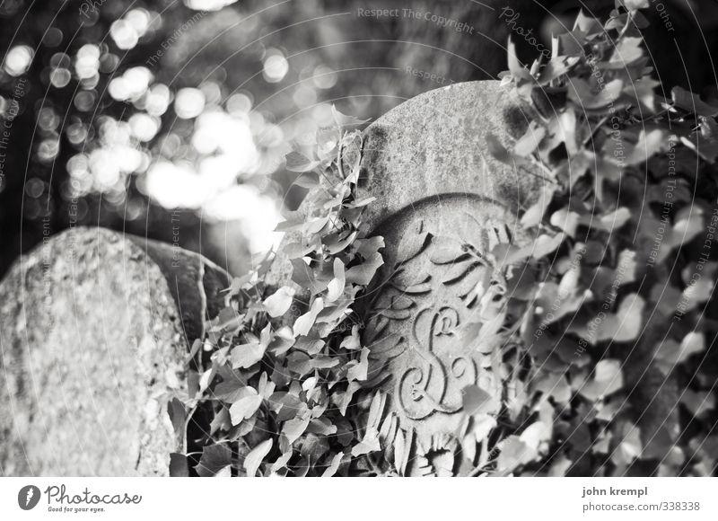 R.I.P. Efeu Paris Friedhof Grabstein Stein alt gruselig Hoffnung Glaube Trauer Tod Sehnsucht Ende Endzeitstimmung Religion & Glaube Schwarzweißfoto