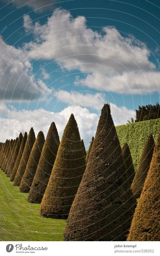 stillgestanden! Umwelt Natur Landschaft Pflanze Wolken Sträucher Grünpflanze Lebensbaum Park Paris Versailles Schloss Versailles stehen ästhetisch rund Spitze