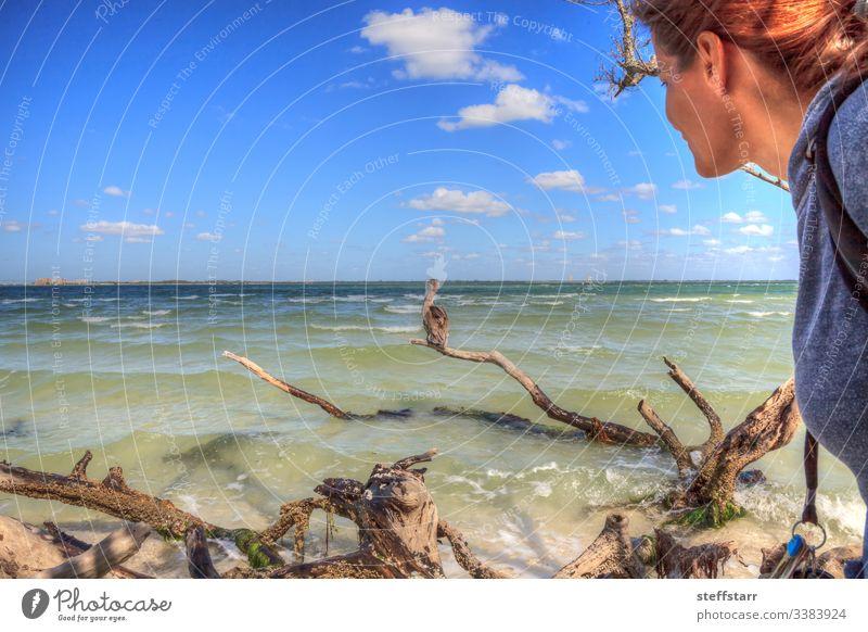 Vogelfrau beobachtet einen Braunen Pelikan Pelecanus occidentalis Frau beobachten zuschauen Vogelbeobachtung Brauner Pelikan Wasservögel Tier Tierwelt schwimmen