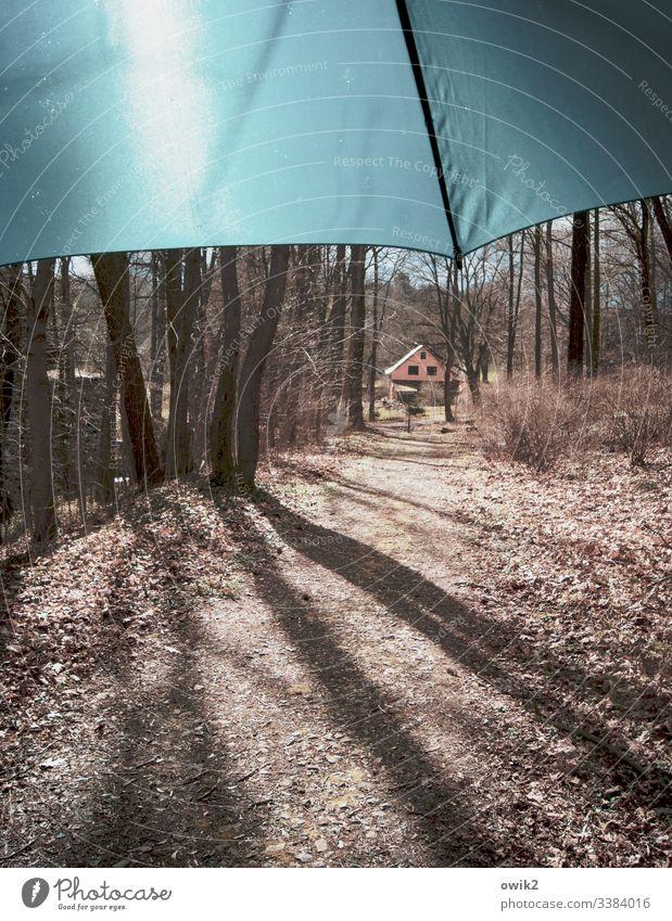 Trampelpfad Waldweg Bäume Schirm Sonnenlicht draußen menschenleer Natur Menschenleer Herbst Pflanze Umwelt Außenaufnahme Licht natürlich Erholung Sonnenstrahlen