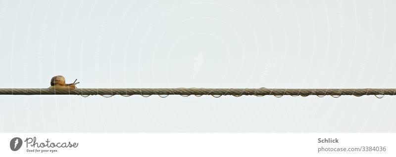 Kleine Schnecke auf Wäscheleine mit Wassertropfen gegen den Himmel fotografiert klein Balance Seiltänzer Kunststück Balanceakt Gleichgewicht Drahtseil