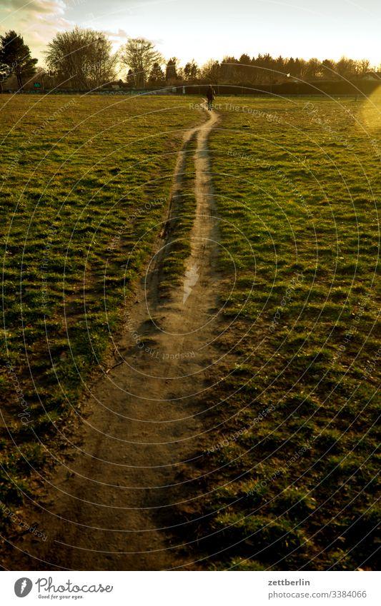 Pfad über die Wiese natur pfad pflanze ruhe textfreiraum tiefenschärfe wandern weg wanderweg wiese rasen gras Sonnenuntergang gegenlicht feierabend heimweg