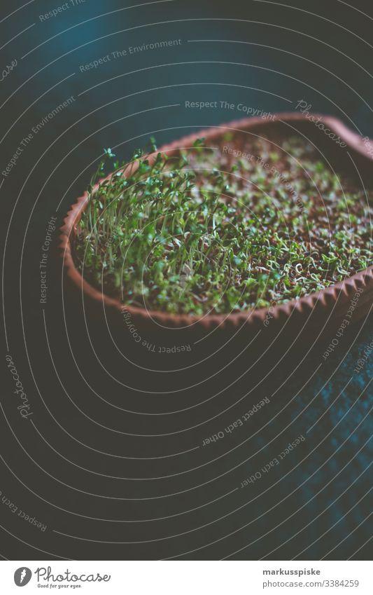 Frische Gartenkresse Lepidium sativum frisch gesund nachhaltig essen wachsend gedeiht Selbstversorgung Selbsterversorger Gemüse Kräuter Aufzucht Saatgut