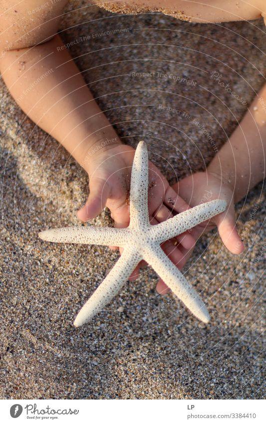 Seesterne in den Händen eines Kindes am Strand Seeküste Stern (Symbol) Meer Natur Sand Angebot Geschenk Sommer Ferien & Urlaub & Reisen Erholung marin schön