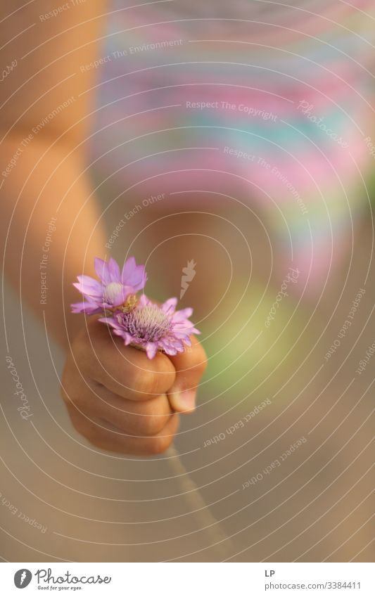 Ein Kind hält violette Blumen Blumen Nahaufnahme Geschenk Natur Garten Blüte Muttertag Geschenke Blumenstrauß Frühling rosa Eltern Kindererziehung Liebe