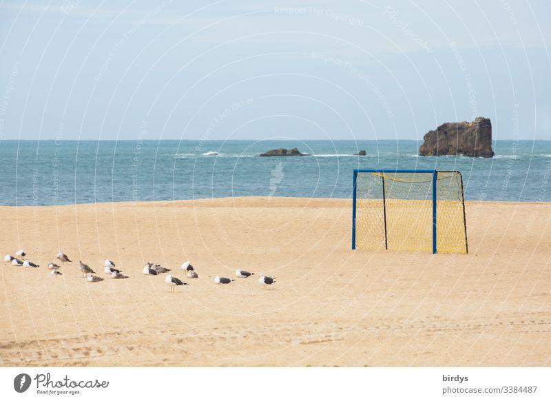 Einsames Fußballtor am menschenleerem  Strand von Nazare, Portugal, eine Gruppe Möwen im Sand , Atlantik im Hintergrund und Felsen im Meer Möwenvögel