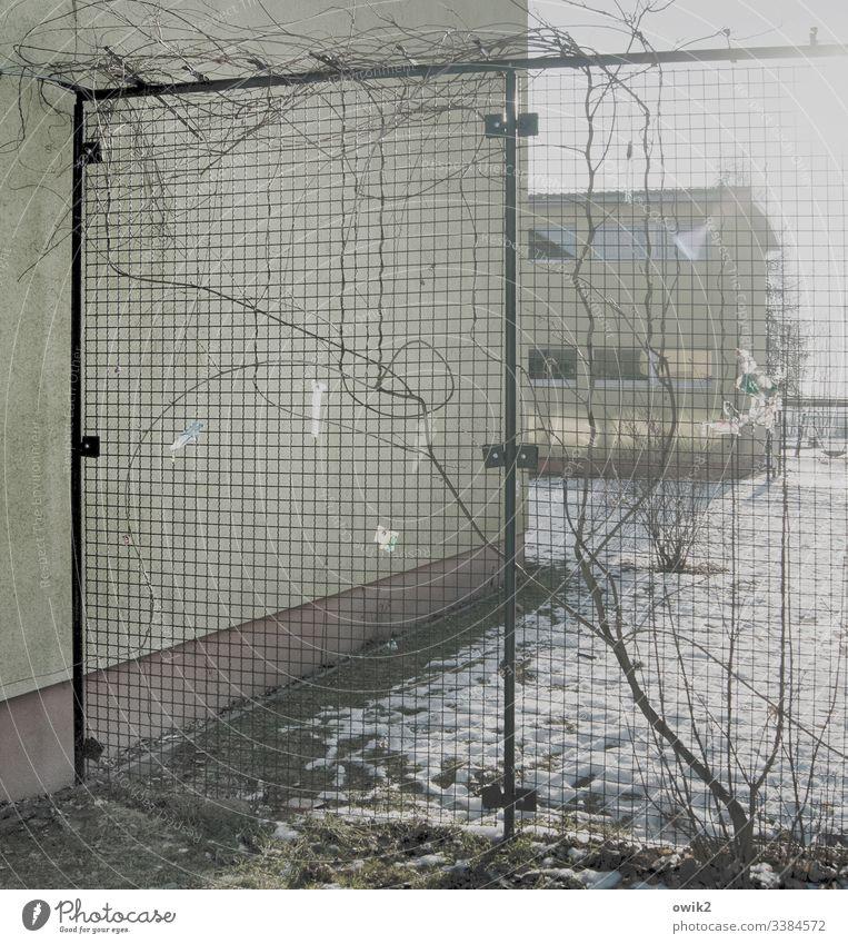 Hinter Gitter Wand draußen Gebäude Schule Gotter Maschendraht Zaun Barriere Kletterpflanzen Ranke Maschendrahtzaun Menschenleer Draht Sicherheit Detailaufnahme