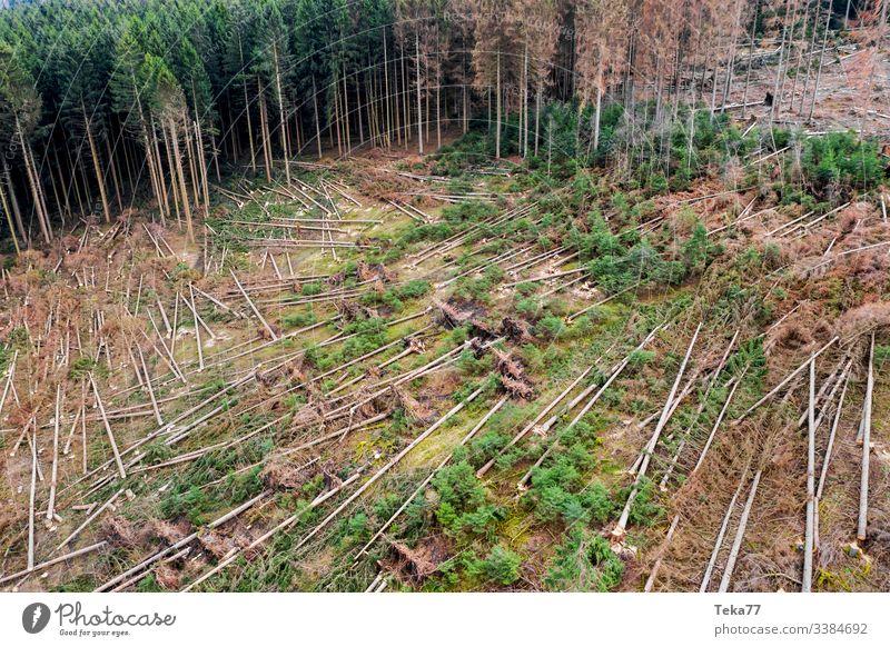 #Wald Sturmschäden 2 wald sturmschäden baum bäume luftbild stamm holz nadelwald orkan schräg wurzeln äste