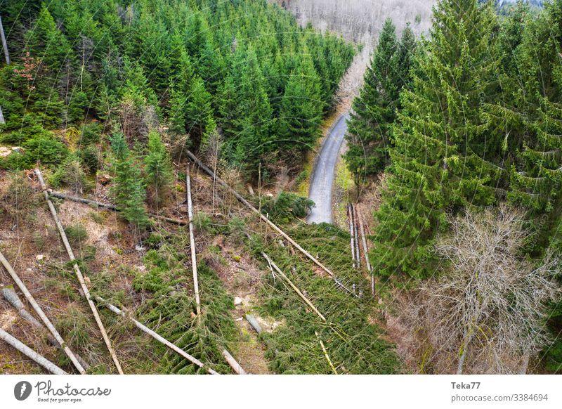 #Wald Sturmschäden Straße wald sturmschäden baum bäume luftbild stamm holz nadelwald orkan schräg wurzeln äste straße waldweg waldstraße transport teer