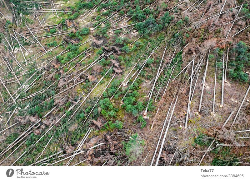 #Wald Sturmschäden 1 wald sturmschäden baum bäume luftbild stamm holz nadelwald orkan