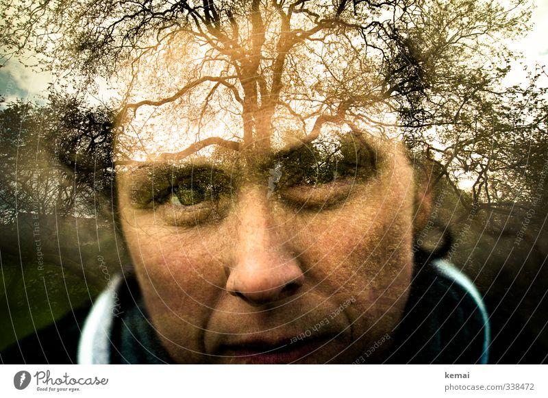 Helgiland | Thriving tree Mensch Frau Natur Pflanze Baum Landschaft Erwachsene Umwelt dunkel Auge Leben feminin Gefühle Kopf groß Wachstum