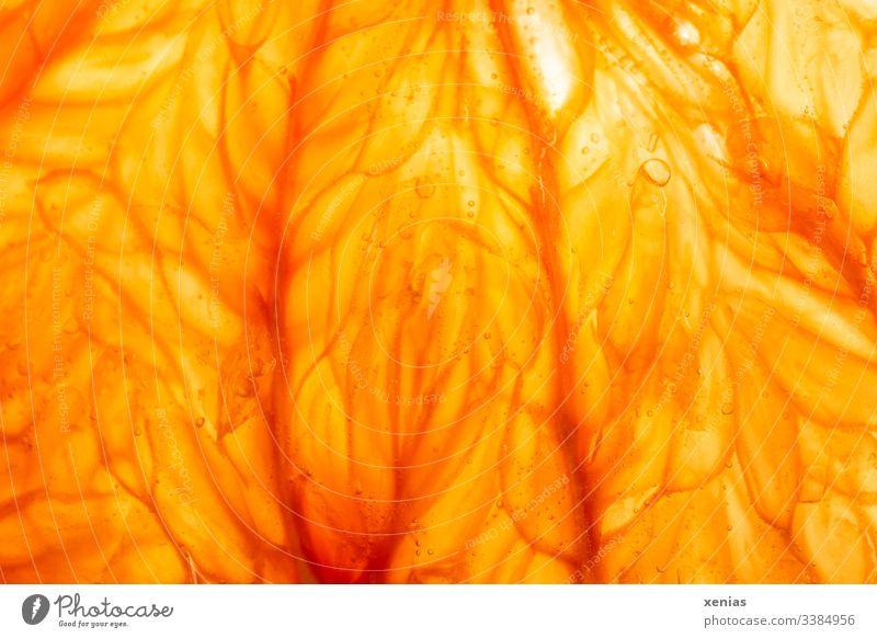 Saftschläuche einer Pampelmuse Sommerobst frisches Obst Frucht orange Gesunde Ernährung saftig Bioprodukte Vitamin Vegetarische Ernährung