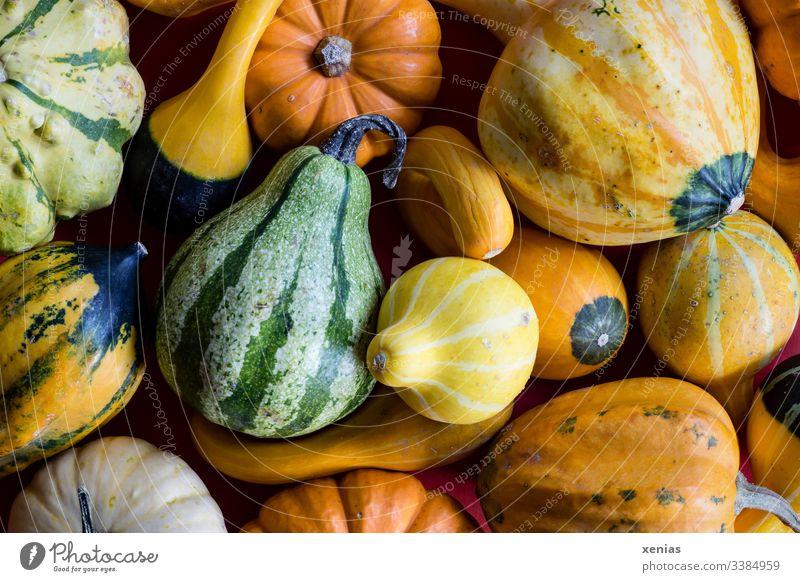Zierkürbisse in gelb, grün und orange Kürbis Früchte Herbst Dekoration & Verzierung Erntedankfest Halloween Natur saisonbedingt