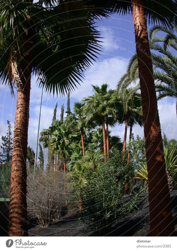 palmen Palme Süden Ferien & Urlaub & Reisen Natur