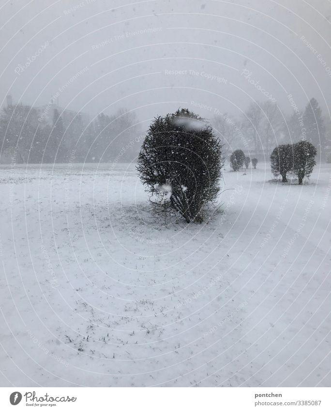 Verschneite Landschaft Schneeflocken bewegungsunschärfe schnee landschaft baum Wiese boden Weiß nebel Gras bedeckt Grau Menschenleer Nebel Außenaufnahme kalt