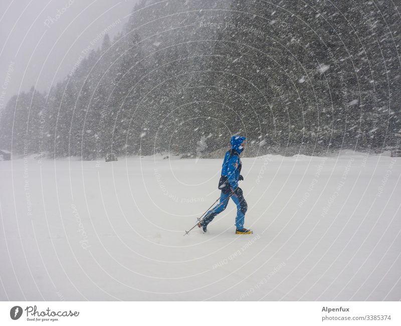 Mann, total blau! männlich Erwachsener Schnee Schneesturm Winter kalt Schneefall Unwetter Schneeflocke Wetter Farbfoto Umwelt Außenaufnahme Natur