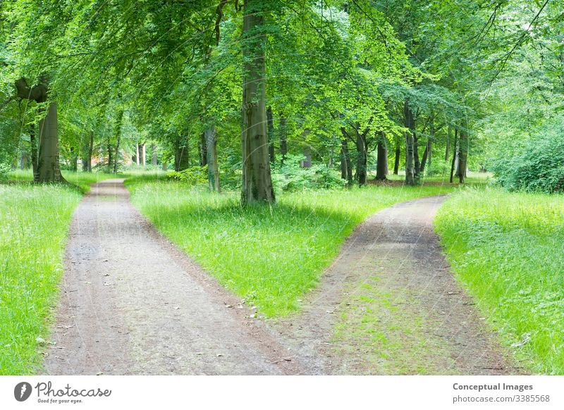 Gabelung auf dem Weg durch den Wald Wahl Anschluss Land Entscheidungen Regie Fußweg Weggabelung grün Ideen Mysterium Natur Park szenische Darstellungen Sommer