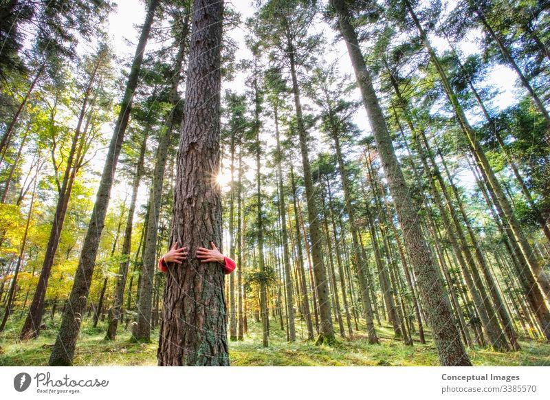 Ein Mann, der einen Baum im Wald umarmt anhänglich Arm um Rinde schön bizarr Bonden Tarnung Pflege Anschluss Abhängigkeit umarmend Umwelt Umweltschonung grün