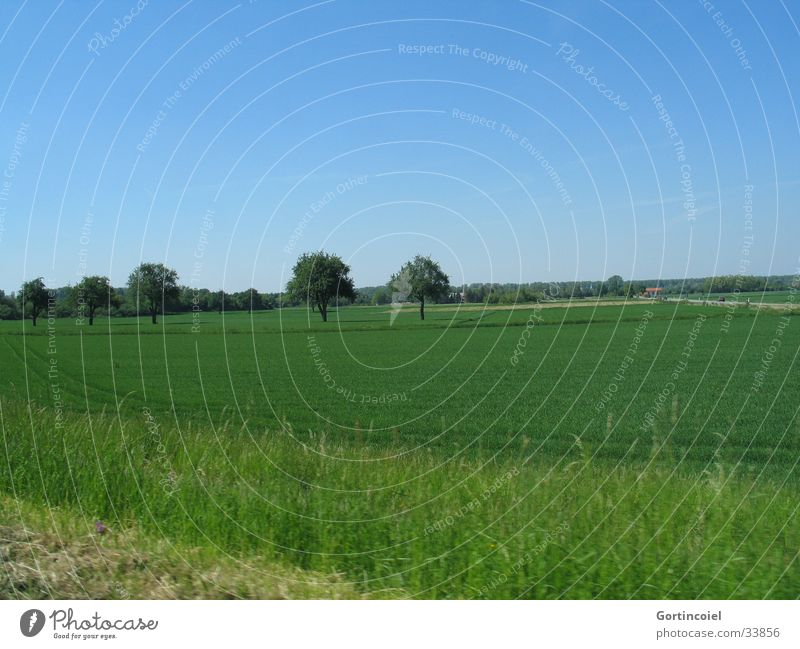 Feld mit Bäumen Ferien & Urlaub & Reisen Umwelt Natur Landschaft Himmel Frühling Sommer Pflanze Baum Gras Wiese Straße fahren blau grün KFZ Rasen Ackerbau