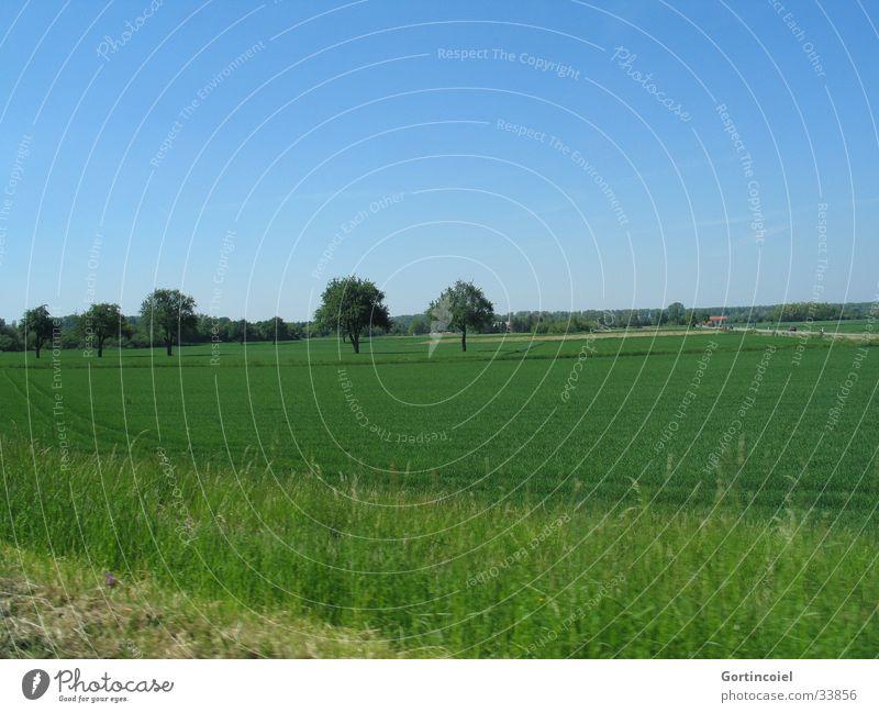 Feld mit Bäumen Natur Himmel Baum grün blau Pflanze Sommer Ferien & Urlaub & Reisen Straße Wiese Gras Frühling Landschaft Umwelt