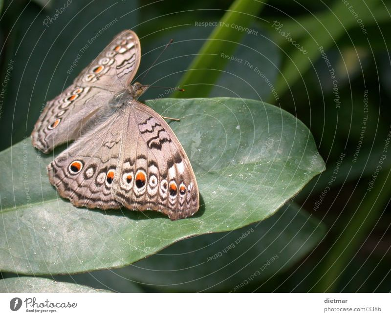Schmetterling Natur Tier