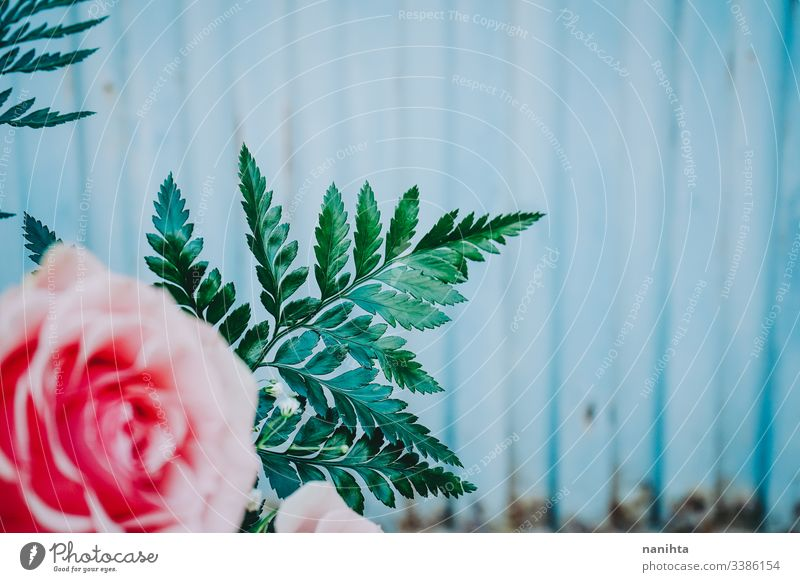 Wunderschöner Strauß rosa Rosen Frühling Hintergrund Blumenstrauß Hochzeit Dekoration & Verzierung frisch Frische Korallen Geschenk Valentinsgruß Valentinstag
