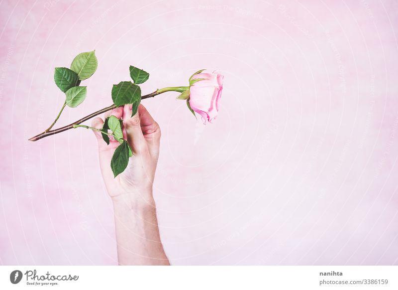 Männerhand hält eine rosa Rose männlich Hand Roséwein neu Maskulinität maschile Mann Arme filigran zerbrechlich Stimmung sensiv sensibel berühren weich