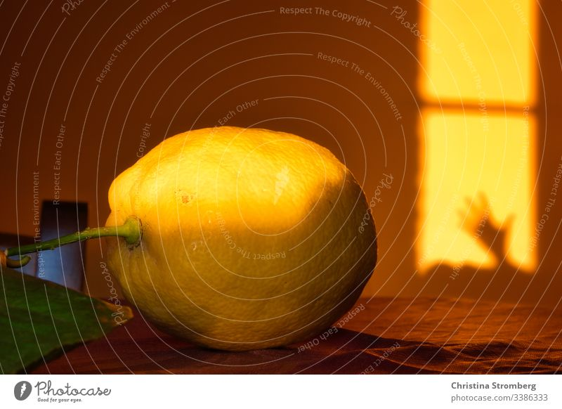 Life of lemon citrus citrus fruit evening mood food juicy moody shadow shadows tuscany tuscany italy volterra yellow yellow background yellow backgrounds