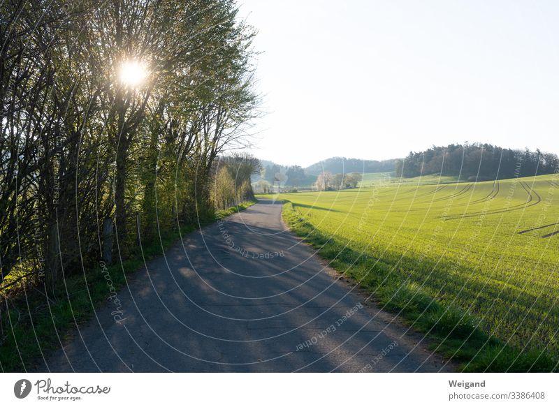 Weg zum Spazierengehen Spaziergang Wege & Pfade Frühling Sonne Sonnenlicht Hoffnung Auszeit Gelassenheit freizeit