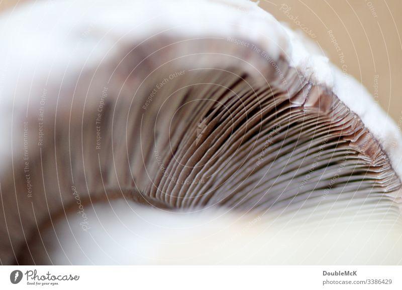 Pilzlamellen im Detail zu sehen Detailansicht Natur Detailaufnahme Menschenleer Nahaufnahme Makroaufnahme braun Gedeckte Farben Schwache Tiefenschärfe Pilzhut