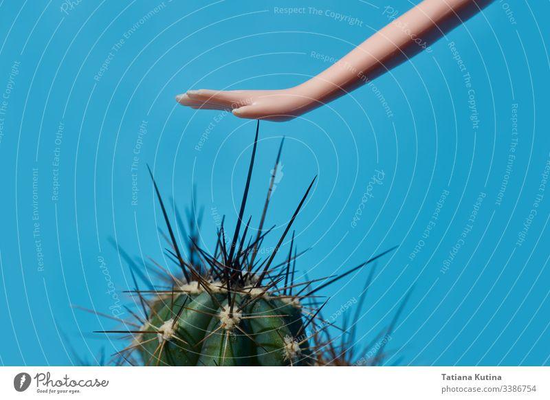Puppenhand berührt die Kakteenstacheln in Nahaufnahme. blauer Hintergrund mit Kopierraum Kaktus Pflanze Konzept Spielzeug Kind Model Objekt Hand Muster grün