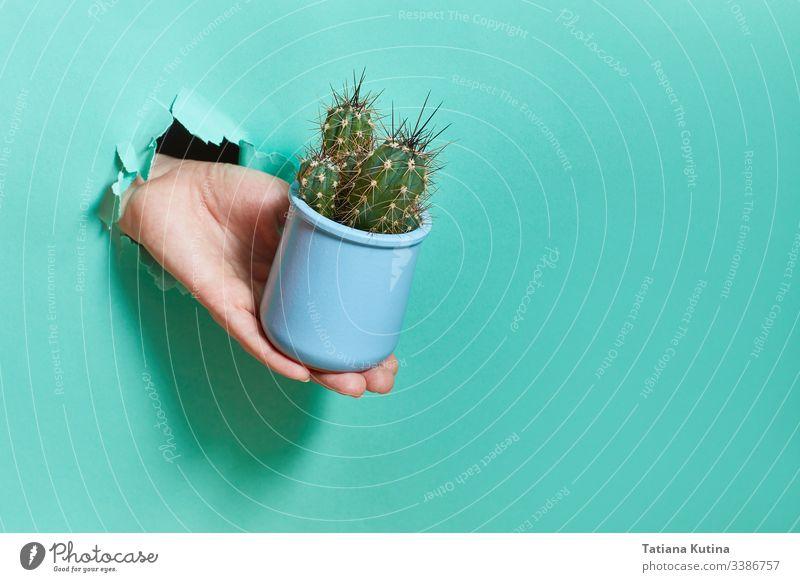 Eine weibliche Hand aus einem Loch in einem Papier hält einen blauen Kaktustopf. Golfloch Konzept Stacheln Nadeln Frau gerissen Töpferwaren Geschenk Blumenerde