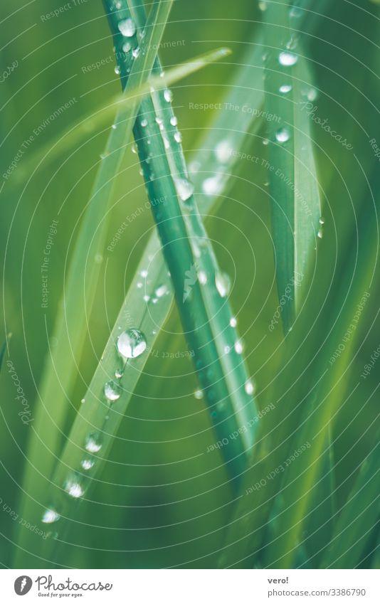 nasses Gras Natur Wiese Detailaufnahme grün Außenaufnahme Grünpflanze Makroaufnahme klatschnass water Botanik Pflanze frisch Wasser schön Menschenleer