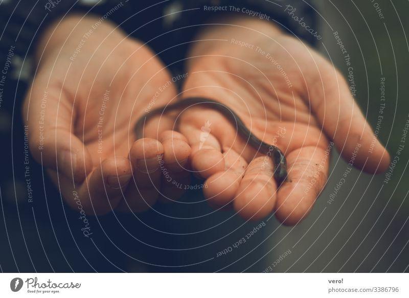 Rettet den Regenwurm Farbfoto Außenaufnahme Bodenlebewesen animal braun berühren beobachten Wurm Wildtier Hand Mensch Finger klein Neugier natürlich Leben