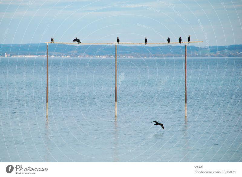 Vögel am See Landschaft Wasser Natur Farbfoto Ausflugsziel Menschenleer Außenaufnahme Horizont blau maritim Schönes Wetter Reflexion & Spiegelung fliegen Vogel