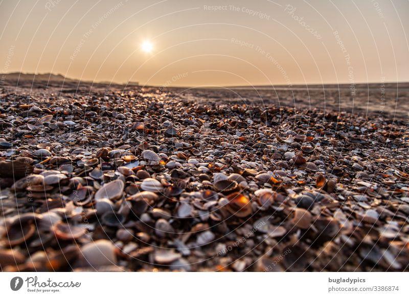 Muscheln am Strand aus der Froschperspektive bei Sonnenuntergang muscheln Meer Küste Nordsee Sonnenlicht Natur Sand Ferien & Urlaub & Reisen Außenaufnahme