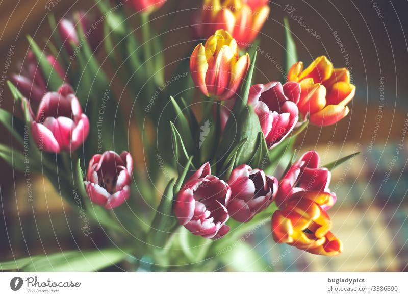 Bunter Tulpenstrauß in Vase von oben tulpenstrauß Tulpenblüte Blüte Frühling Pflanze Innenaufnahme Tag Blühend Farbfoto leuchtende Farben frische Farben