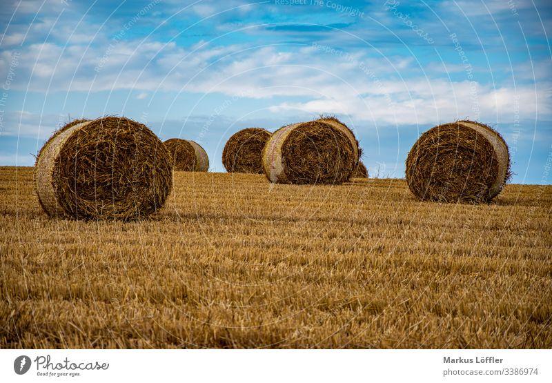 Strohrollen auf dem Feld Natur Landschaft Himmel Ernte einbringen