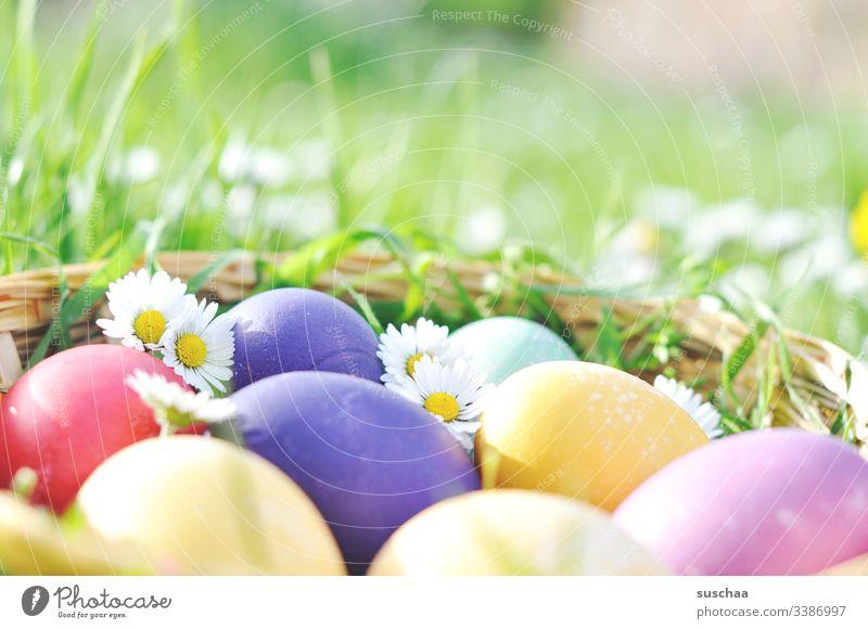 bunte ostereier mit gänseblümchen Ostern Ostereier Frühling Dekoration & Verzierung Außenaufnahme Feiertag festlich Blume Tradition Feste & Feiern gekochte Eier