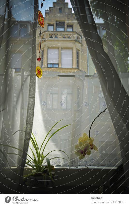 fenster, von innen nach außen geschaut .. Fenster Vorhang Zimmerpflanze Orchidee Blume Pflanze Blumentopf Fensterbrett Innenaufnahme Häusliches Leben