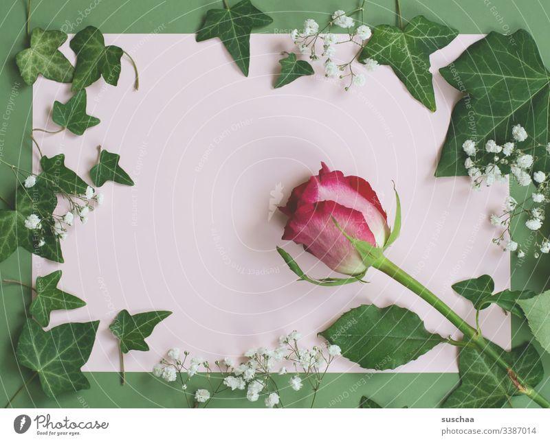textfreiraum mit rahmen aus efeu und einer rose Textfreiraum Flatlay Textfreiraum Mitte Innenaufnahme Dekoration & Verzierung Design Pflanze Blatt