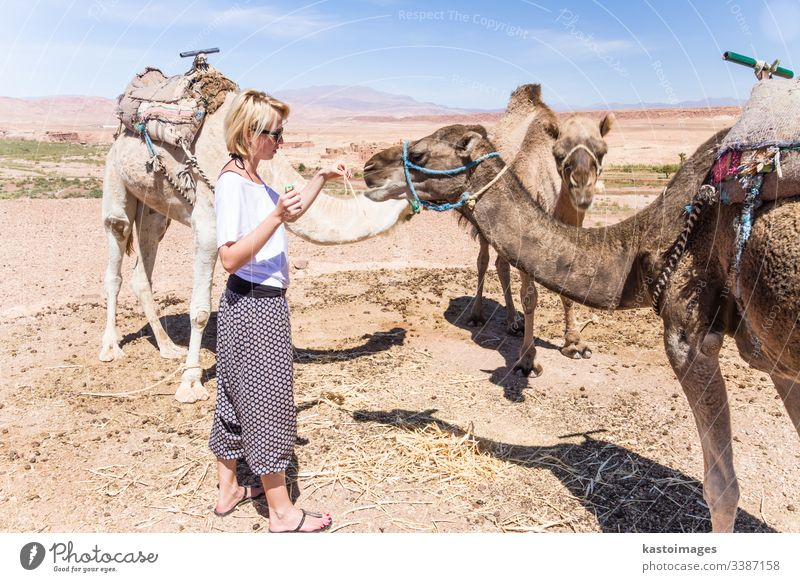Junge Frau mit Kamelen in Marokko. Camel Dromedar Haustier wüst Mädchen Abenteuer Tier Arabien Kaukasier Ausflugsziel Dunes Ägypten Dame mehendi Nomade