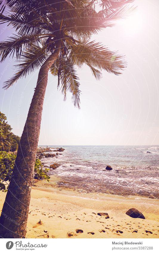 Tropischer Strand mit Kokospalme gegen die Sonne. Sommer Handfläche MEER Meer Urlaub Feiertag friedlich altehrwürdig retro Instagrammeffekt gefiltert Sand