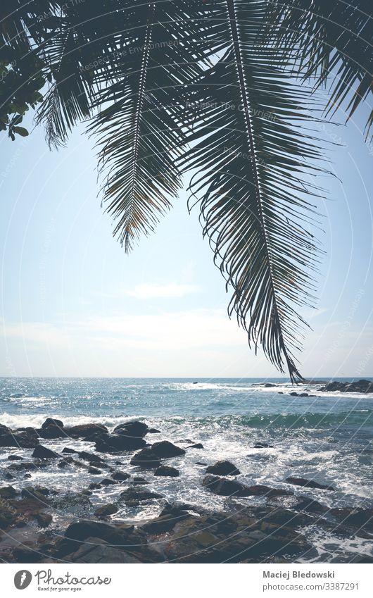 Palmenblätter gegen die Sonne an einem tropischen Strand. Sommer Handfläche Blatt MEER Meer blau Minimalismus Urlaub Feiertag friedlich altehrwürdig retro