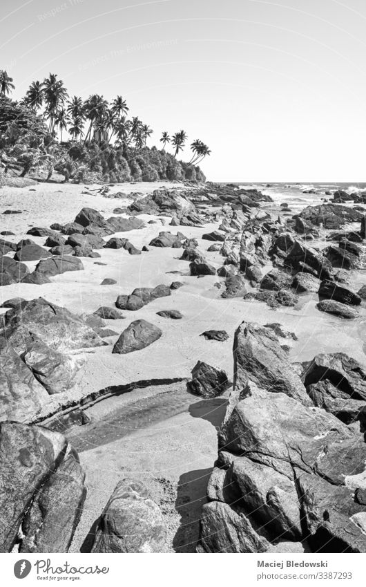 Schwarz-Weiß-Bild eines Felsstrandes, Sri Lanka. Strand schwarz auf weiß tropisch Sommer SCHWARZ-WEIß Felsen Sand Himmel Handfläche keine Menschen Landschaft