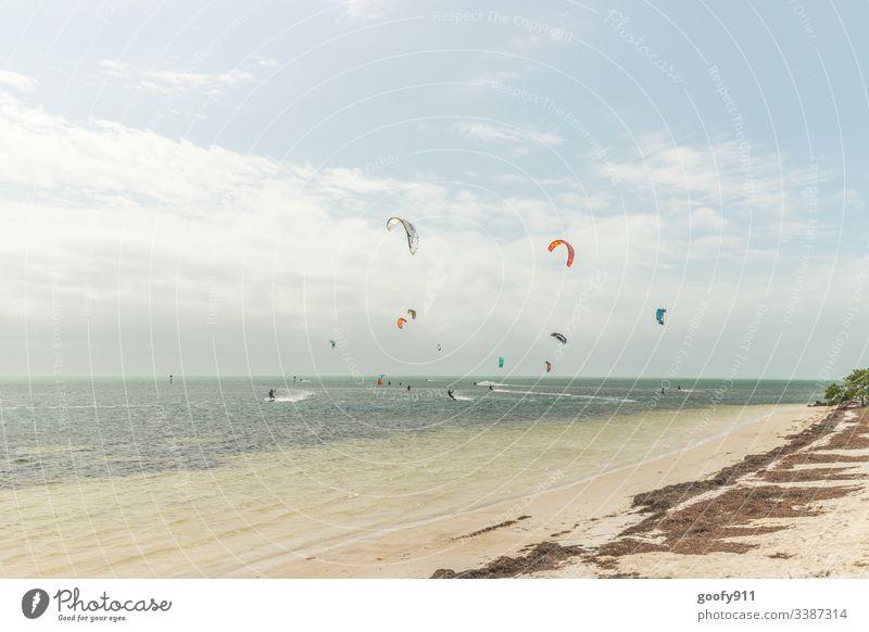 Vom Winde verweht Surfen Meer Wellen Strand Surfer Wassersport Sport Sand Außenaufnahme Abenteuer Freude Brandung Lifestyle Freizeit & Hobby Küste Farbfoto