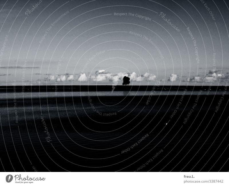Der einsame Baum am Ufer der Schlei genoss die sanfte Nähe der weißen Schönwetterwolken. Außenaufnahme Wasser Ostsee Ferien & Urlaub & Reisen Meer Ausflug Küste