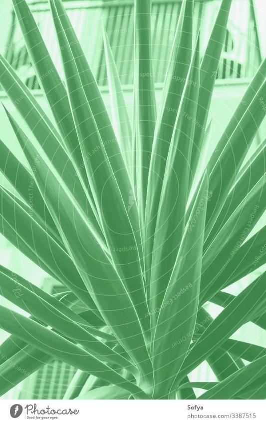 Sukkulente in der Stadt. Minze-Farbe 2020 Natur Sommer Frühling neo grün Design zartes Grün Stilrichtung trendy modern Neogrün grüne Minze Farbe Jahr Handfläche