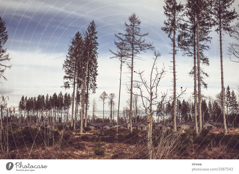 Center Parks Allgäu Center Parcs Landschaft Wald Sturm Winter Hüttenferien Häuser Natur Außenaufnahme Himmel kalt Tag Baum Pflanze Eis Menschenleer Farbfoto
