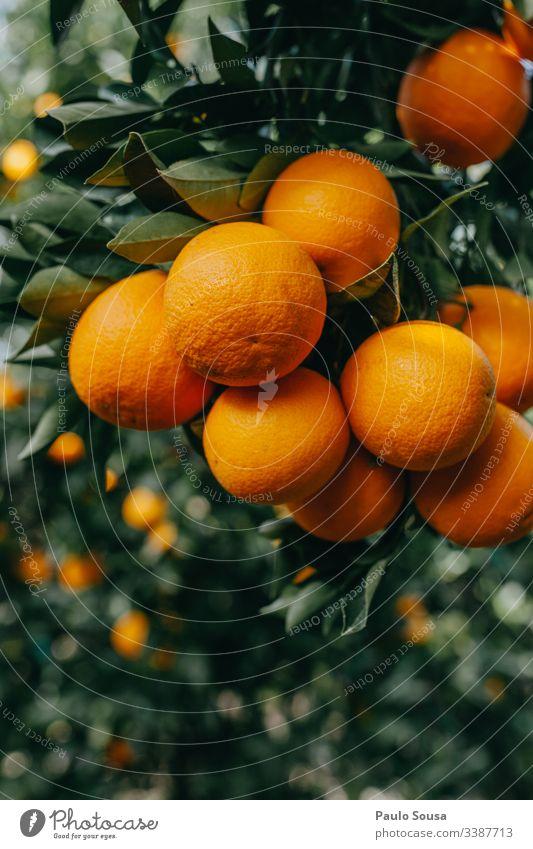 Nahaufnahme von Orangen in einem Baum orange Orangensaft Saft frisch Frucht Gesundheit Vitamin Erfrischung Zitrusfrüchte Vitamin C Ernährung Lebensmittel